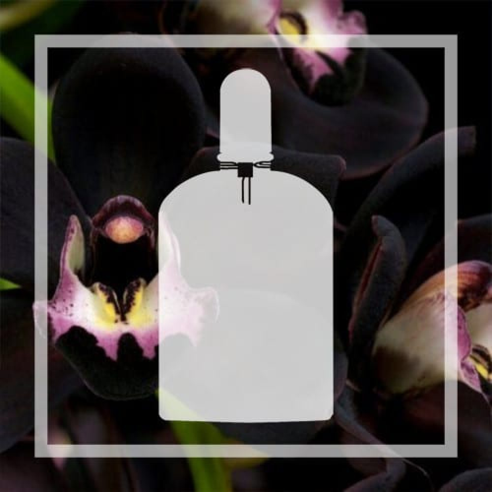 Vegan alternative to Black Orchid