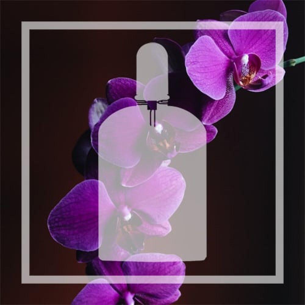 Vegan alternative to Velvet Orchid