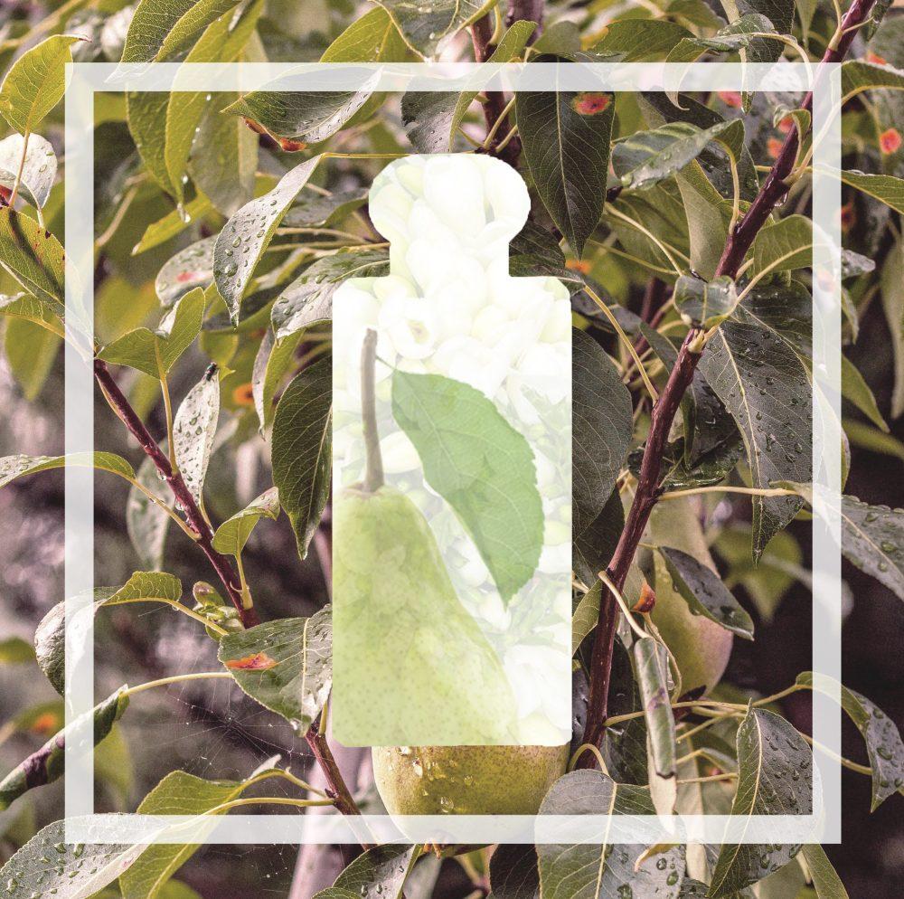 English Pear & Freesia alternative eprfume. Vegan and natural equivalent scent. Jo malone equivalent fragrance