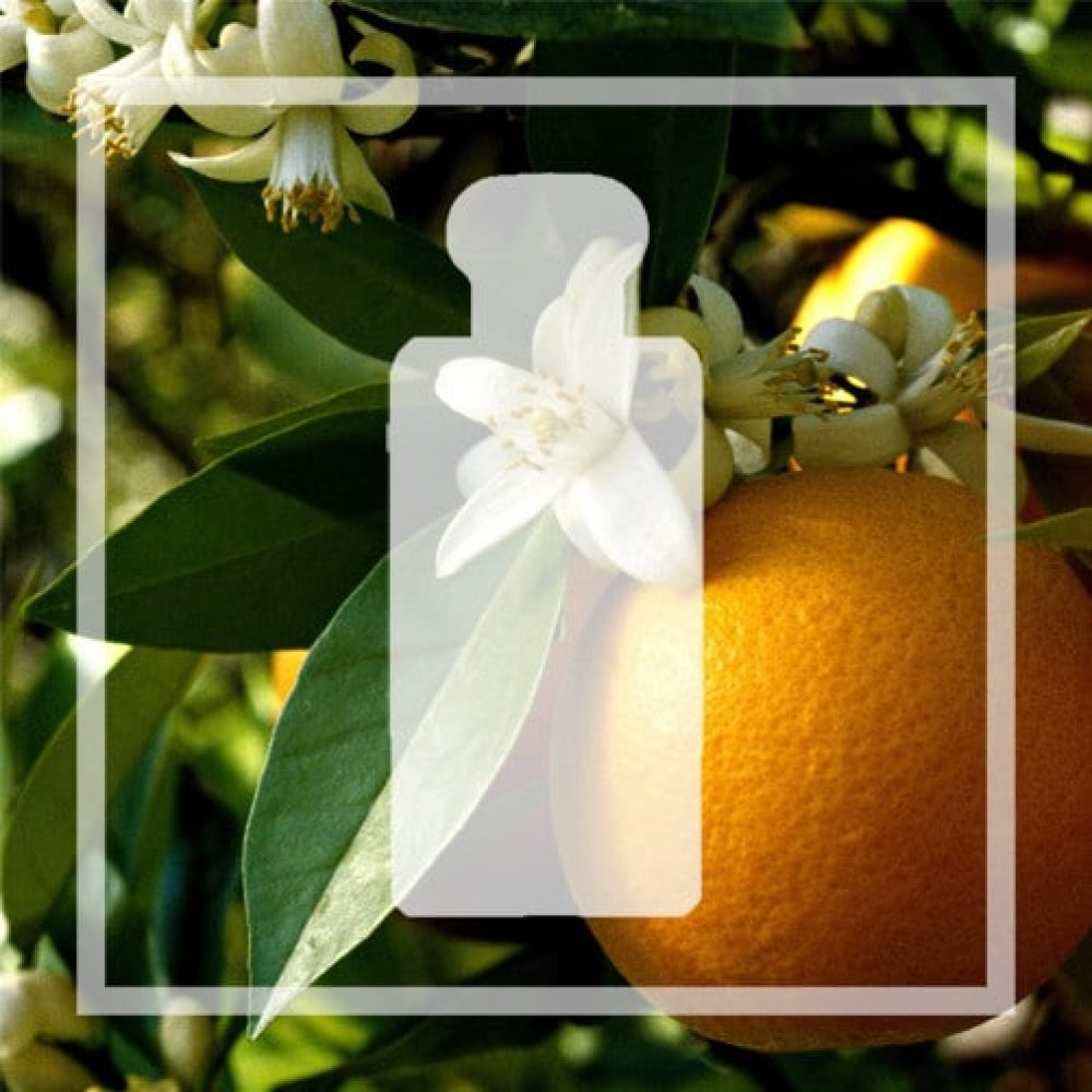 Vegan alternative Orange Blossom by Jo Malone