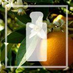 Vegan alternative Orange Blossom by Jo Malone